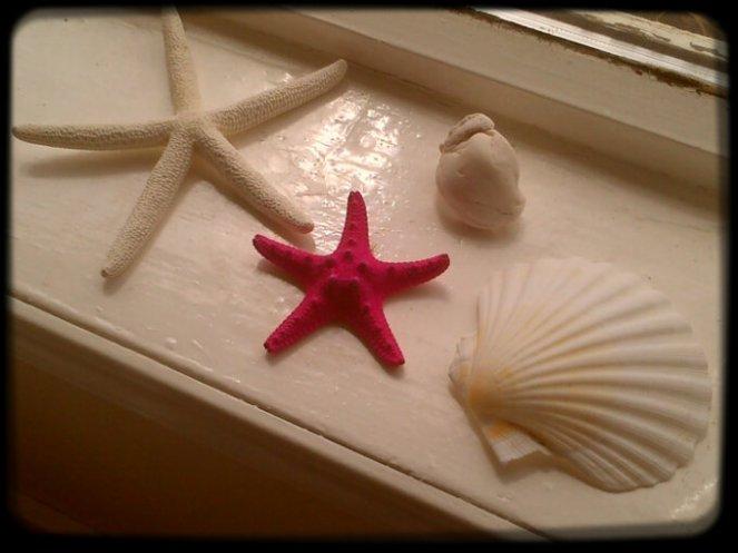 Starfish 015