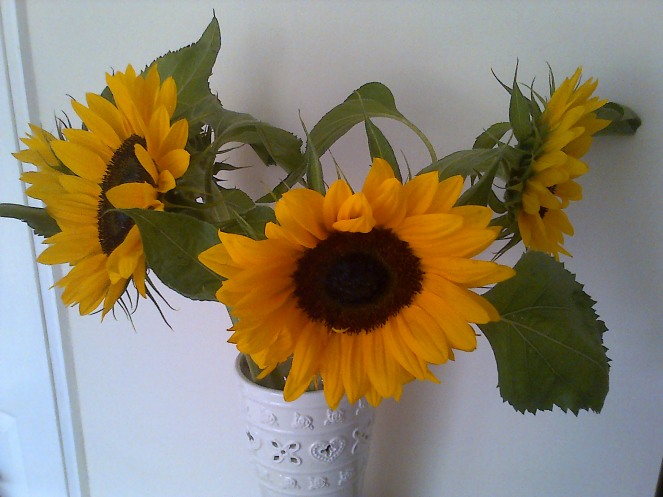 Pretty Sunflowers 002